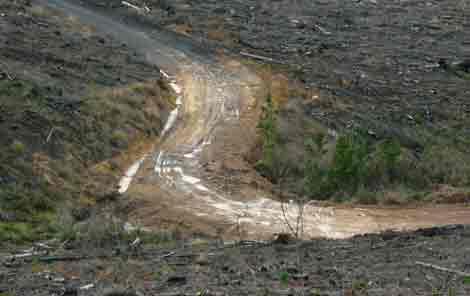 mt Robertson Track at mt Robertson Plantation